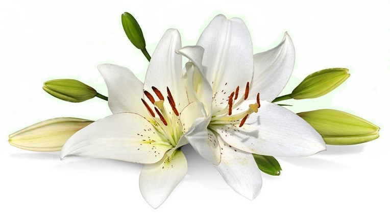 easter-lily-bouquet - copia